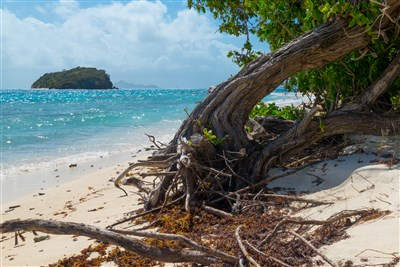 Beach Tobago Cays